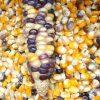 Zapatista corn
