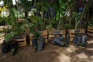 Crates of plants for multiple schools lined up