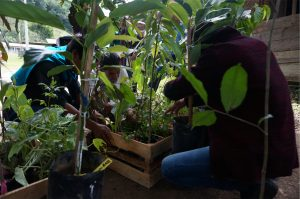 Students check plants