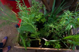 A crate of donated plants