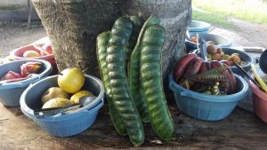 More than a dozen Food Forest fruits were chosen for making fruit salads in order to highlight the possibilities of enjoying sweet food without consuming processed sugars. www.schoolsforchiapas.org/foodforest/donate